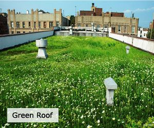 green-roof-3