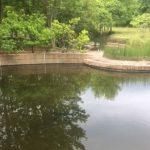 Pond Liner Case Study Image